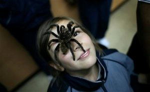 A student poses with a Xenesthis immanis tarantula on her face during an exhibition at a school in Bogota, Tuesday, March 10, 2009. Biologist Dario Gutierrez tours schools throughout Colombia teaching students the use of almost 300 species of arachnids in traditional medicine. (AP Photo/William Fernando Martinez)