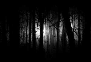 dark_woods_night